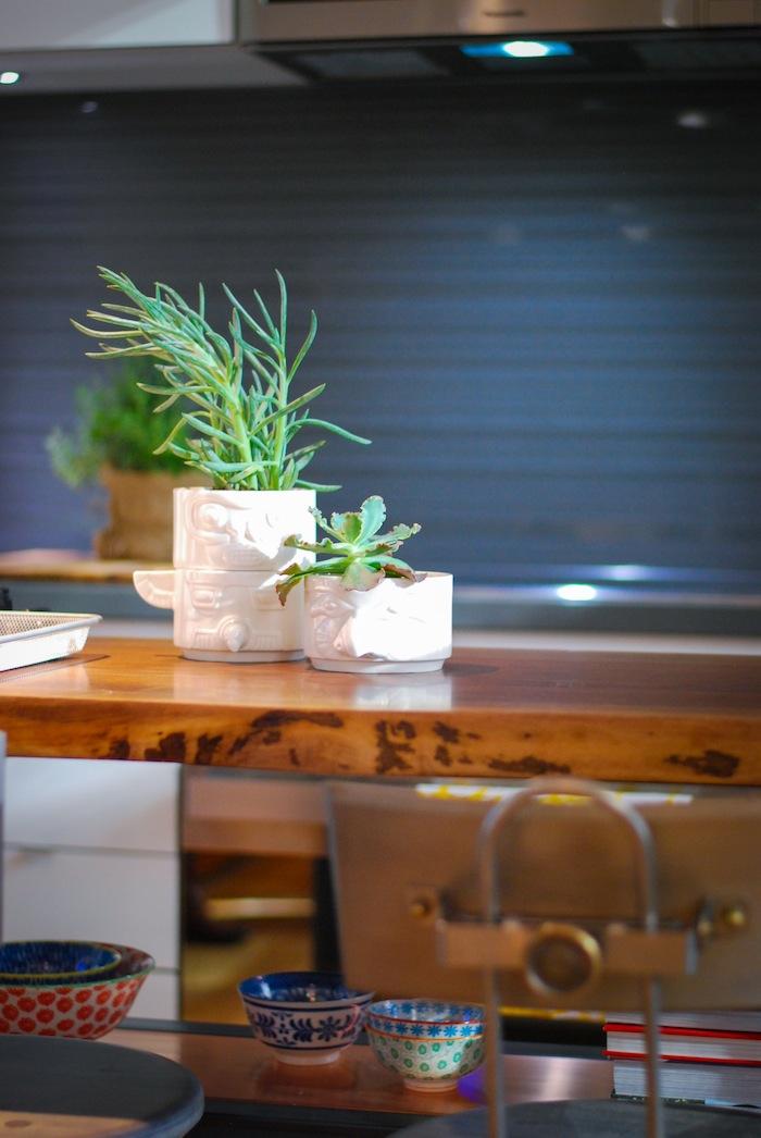 indoor plants DIY